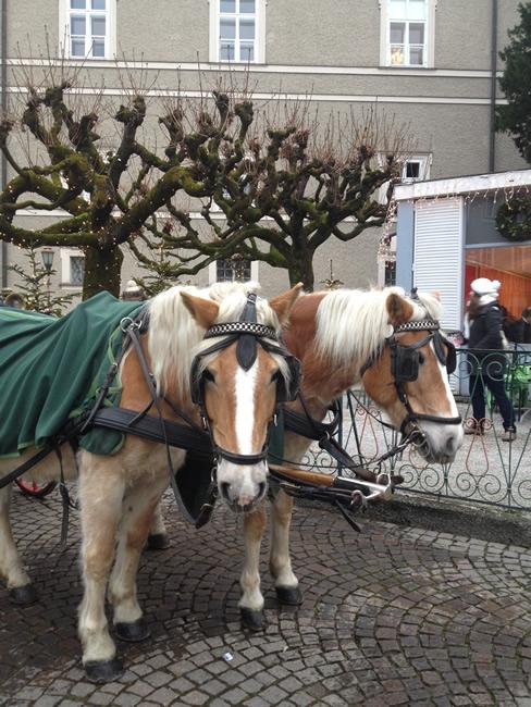 salisburgo_elena_moreschini-8
