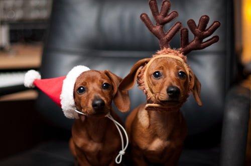 cani ai Mercatini di Natale