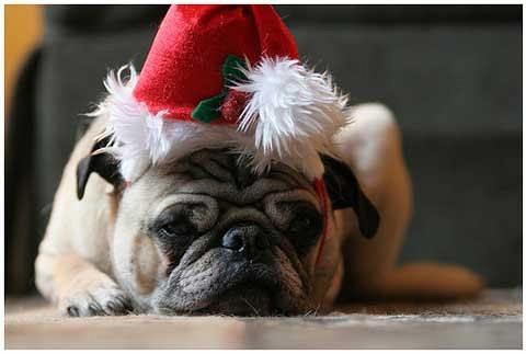 10 consigli per portare i cani ai Mercatini di Natale