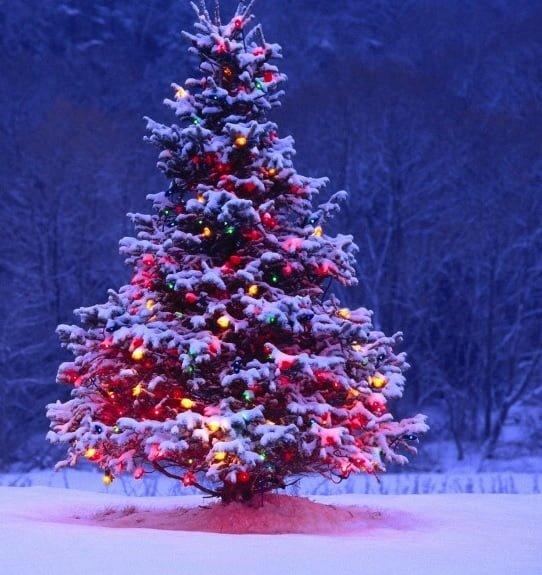 Disegni Di Natale Particolari.Alberi Di Natale Particolari E Originali A Giro Per Il Mondo